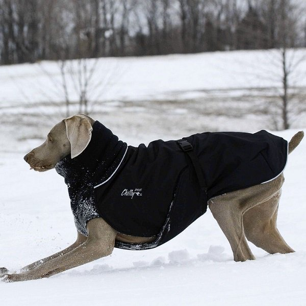【Chilly Dogs】Great White North (大型犬・超大型犬用防寒コート)