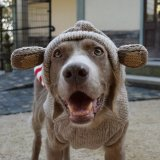 <img class='new_mark_img1' src='//img.shop-pro.jp/img/new/icons57.gif' style='border:none;display:inline;margin:0px;padding:0px;width:auto;' />【Chilly Dog Sweaters】ウール100% ドッグセーター Monkey Hoodie Dog Sweater