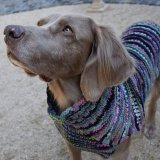 <img class='new_mark_img1' src='//img.shop-pro.jp/img/new/icons57.gif' style='border:none;display:inline;margin:0px;padding:0px;width:auto;' />【Chilly Dog Sweaters】ウール100% ドッグセーター Purple Woodstock Dog Sweater