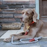 【Auburn Leathercrafters】Natural Cotton Rope Leash (ナチュラルコットンロープリーシュ)