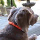 【Auburn Leathercrafters】Natural Cotton & Leather Rope Dog Collars (ナチュラルコットンロープカラー)