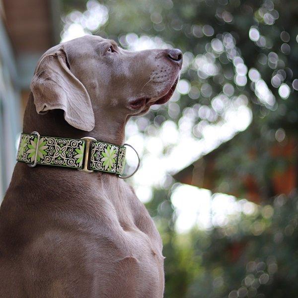 【DIVA DOG】 マーチンゲールカラー5cm幅 (Pinwheel Dutch Spring) ★レターパックOK★