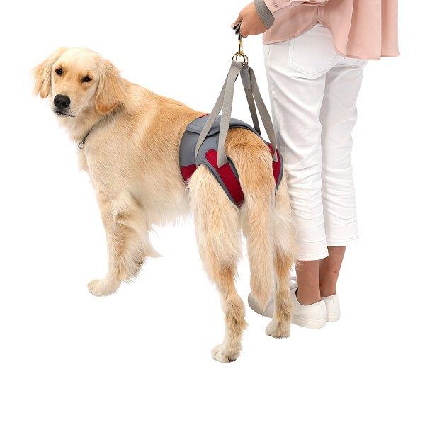 【LaLaWalk】Hip 大型犬用 ラズベリーグレー (メーカー直送商品)