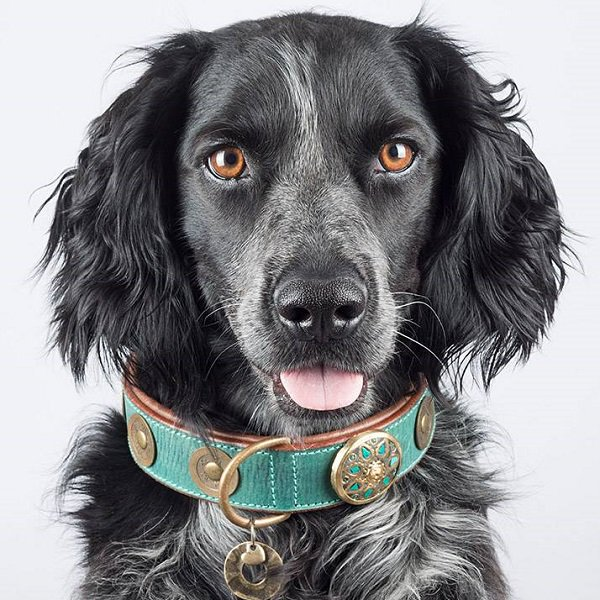 【Dog With a Mission】DWAM 本革製ドッグカラー (REBEL) ★レターパックOK★