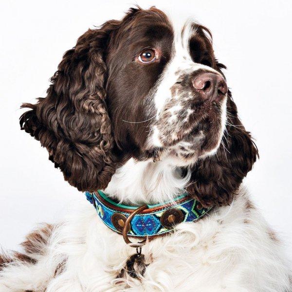 【Dog With a Mission】DWAM 本革製ドッグカラー (BOHO JUAN) ★レターパックOK★