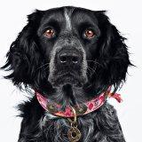 【Dog With a Mission】DWAM 本革製ドッグカラー (BOHO ROSA) ★レターパックOK★