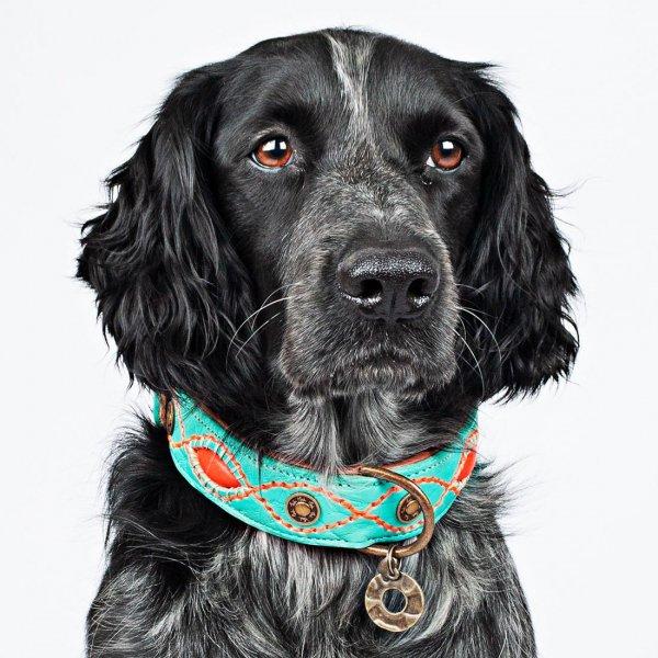 【Dog With a Mission】DWAM 本革製ドッグカラー (Janis) ★レターパックOK★