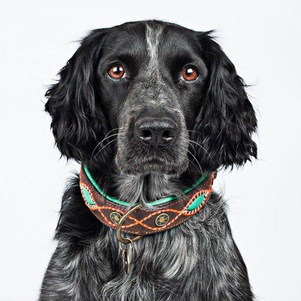 【Dog With a Mission】DWAM 本革製ドッグカラー (JOPLIN) ★レターパックOK★