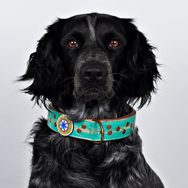 【Dog With a Mission】DWAM 本革製ドッグカラー (AVALON) ★レターパックOK★