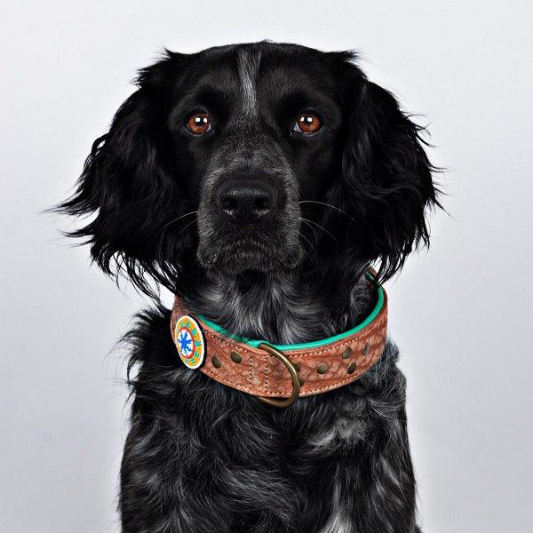 【Dog With a Mission】DWAM 本革製ドッグカラー (PHOENIX) ★レターパックOK★