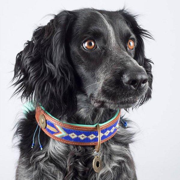 【Dog With a Mission】DWAM 本革製ドッグカラー (STELLA BLUE) ★レターパックOK★