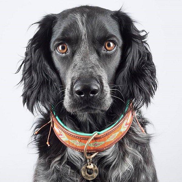 【Dog With a Mission】DWAM 本革製ドッグカラー (TIGER LILLY) ★レターパックOK★