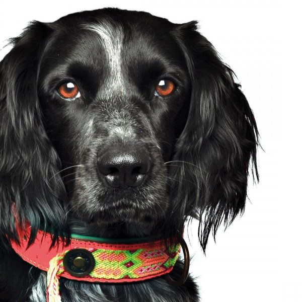 【Dog With a Mission】DWAM 本革製ドッグカラー (Ginger) ★レターパックOK★