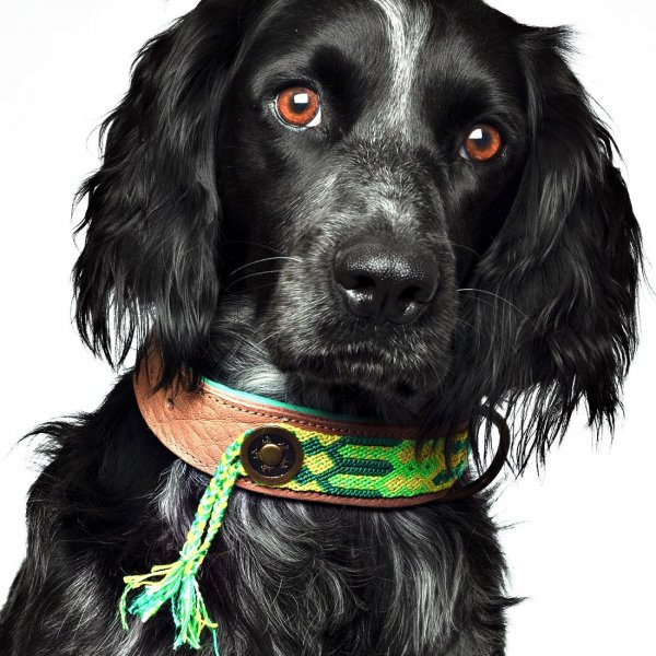 【Dog With a Mission】DWAM 本革製ドッグカラー (CACTUS) ★レターパックOK★