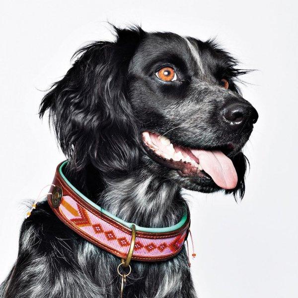 【Dog With a Mission】DWAM 本革製ドッグカラー (Sweet Mae) ★レターパックOK★