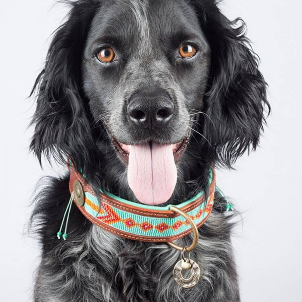 【Dog With a Mission】DWAM 本革製ドッグカラー (Paddy Lee) ★レターパックOK★