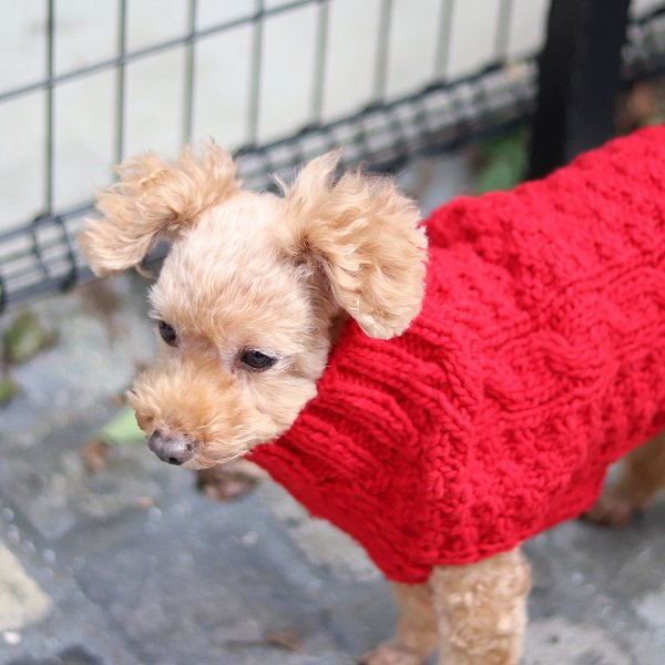 【Chilly Dog Sweaters】ウール100% ドッグセーター Cable Knit Red Dog Sweater