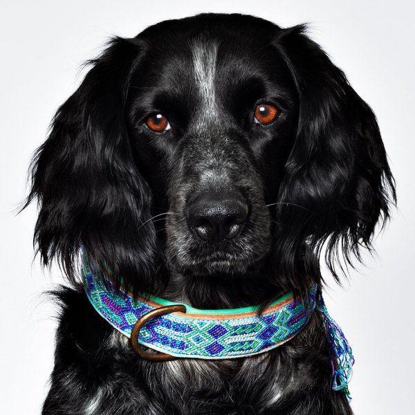 【Dog With a Mission】DWAM 本革製ドッグカラー (Blue) ★レターパックOK★