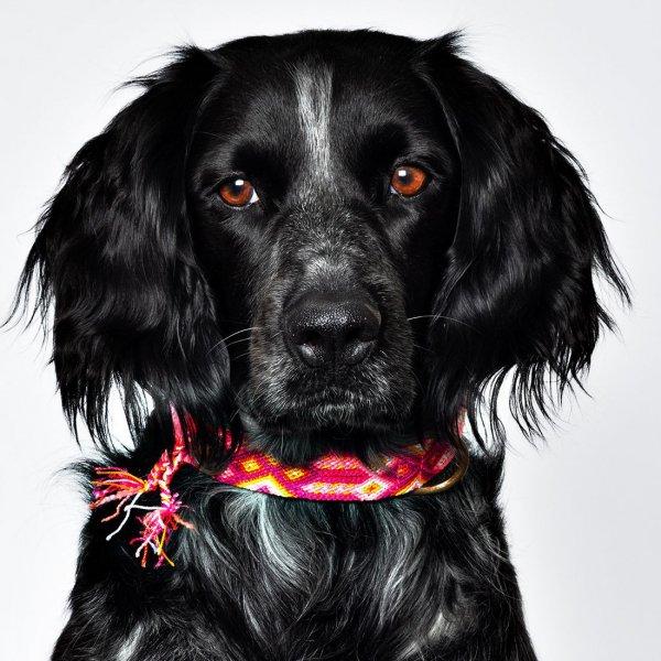 【Dog With a Mission】DWAM 本革製ドッグカラー (ROSE) ★レターパックOK★