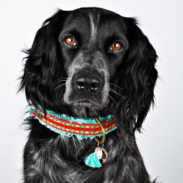 【Dog With a Mission】DWAM ヴィーガンドッグカラー (RUBY) ★レターパックOK★