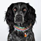 【Dog With a Mission】DWAM ヴィーガンドッグカラー (LOLA) ★レターパックOK★