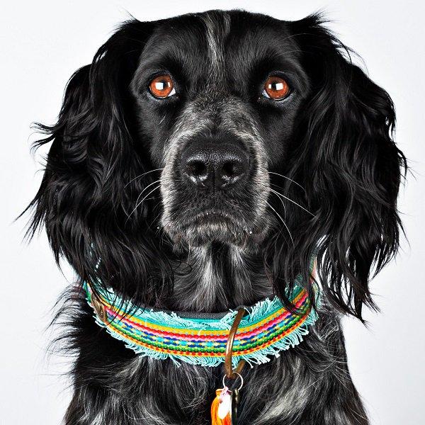 【Dog With a Mission】DWAM ヴィーガンドッグカラー (DIXIE) ★レターパックOK★