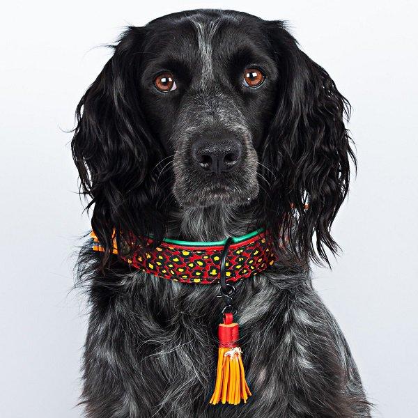 【Dog With a Mission】DWAM 本革製ドッグカラー (RED ROBIN) ★レターパックOK★