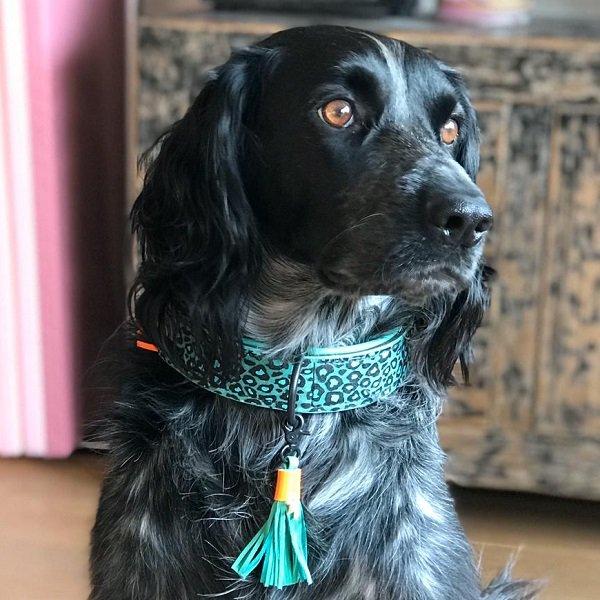 【Dog With a Mission】DWAM 本革製ドッグカラー (BLUE BIRD) ★レターパックOK★