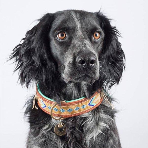 【Dog With a Mission】DWAM 本革製ドッグカラー (Indi Moon) ★レターパックOK★