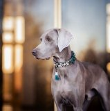 【Dog With a Mission】DWAM 本革製ドッグカラー&ブレスレット (IVY) ★レターパックOK★