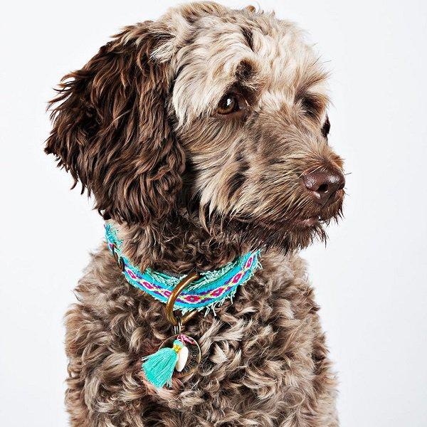 【Dog With a Mission】DWAM ヴィーガンドッグカラー (Finn) 3cm幅 Lサイズ★レターパックOK★