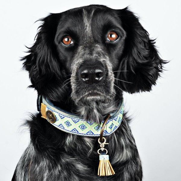 【Dog With a Mission】DWAM ヴィーガンドッグカラー (JUDY BLUE) ★レターパックOK★