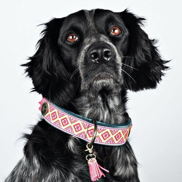 【Dog With a Mission】DWAM ヴィーガンドッグカラー (SANDY MOON) ★レターパックOK★