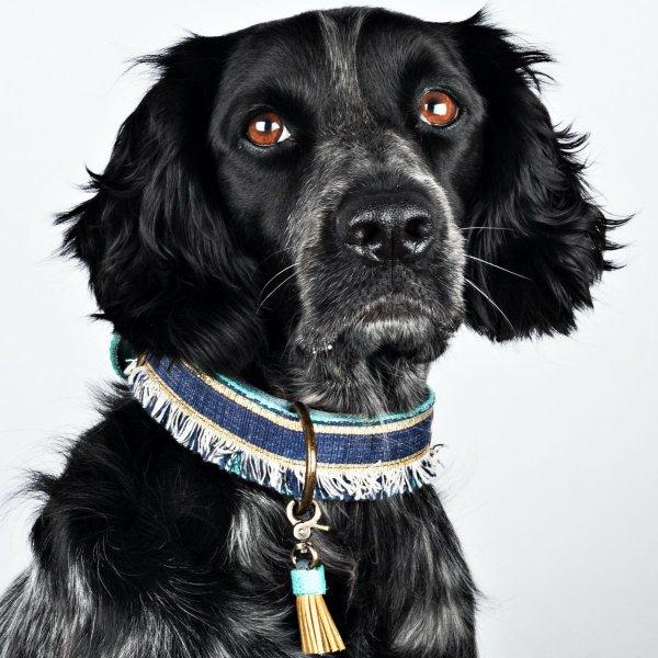 【Dog With a Mission】DWAM ヴィーガンドッグカラー (LENNOX) ★レターパックOK★