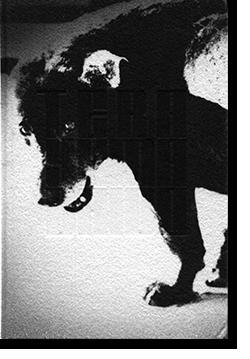 TERAYAMA Daido Moriyama 森山大道 写真集 Japanese Edition 日本語版