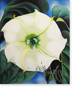 One Hundred Flowers GEORGIA O'KEEFFE ジョージア・オキーフ 作品集