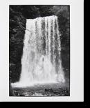 ライカで散歩 「水と石と葉」 北井一夫 オリジナルプリント Walking with Leica