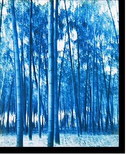 竹林習作の2 剣持加津夫 プリント The study of Bamboo forest #2 KAZUO KENMOCHI print