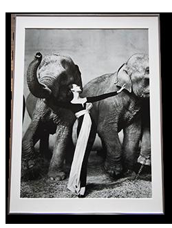 リチャード・アヴェドン ポスター ドヴィマと象 Richard Avedon an exhibition poster