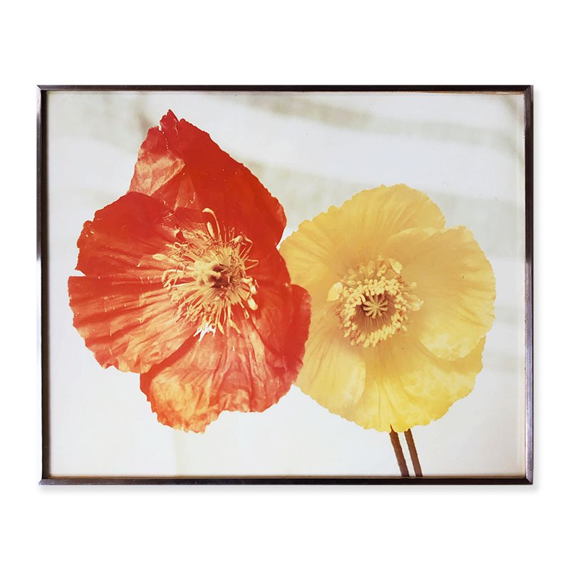 Eiko Yamazawa: Original colour print 「Poppies」<br>山沢栄子 オリジナルプリント 大輪のポピー