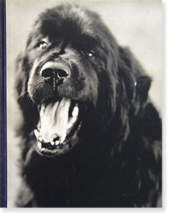 GENTLE GIANTS A BOOK OF NEWFOUNDLANDS Bruce Weber ブルース・ウェーバー 写真集