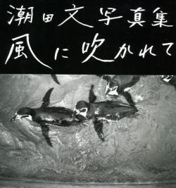 風に吹かれて 潮田文 写真集 USHIODA BUN PHOTOGRAPHS