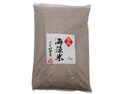 (新米)海藻米こしひかり 玄米