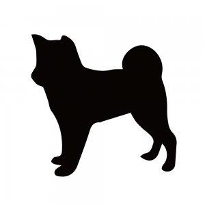 柴犬(147509194)