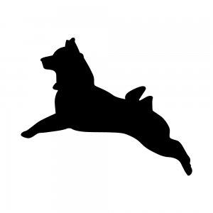 柴犬(147509198)