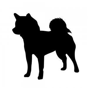 柴犬(147509200)