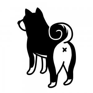 柴犬(147509203)