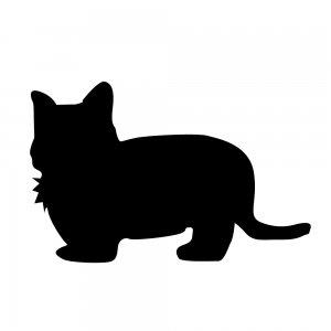 猫(147509315)