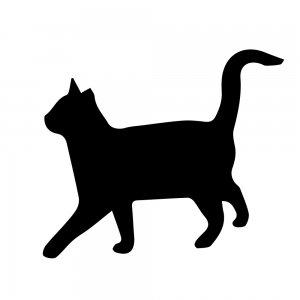 猫(147509329)