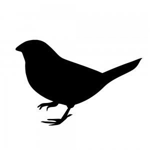 小鳥(147509362)